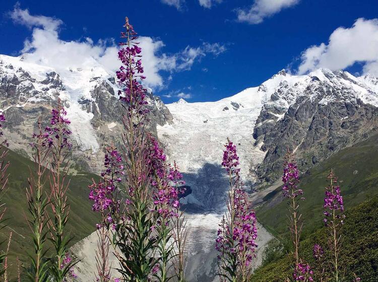 Adishi Gletscher Im Sommer