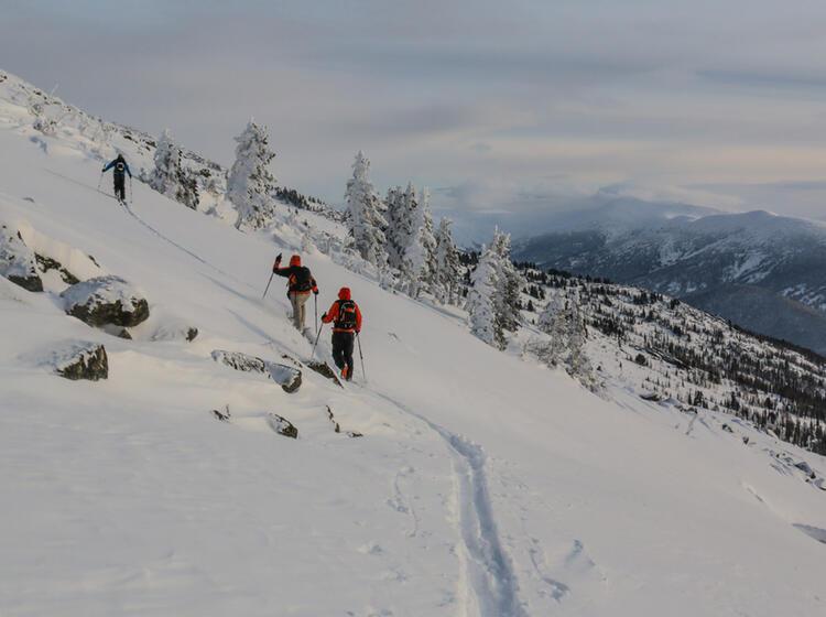 Aufstieg Bei Den Skitouren Im Altai Gebirge