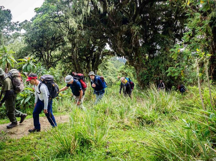 Aufstieg Zum Gipfel Des Kilimandscharo Durch Alle Vegetationszonen
