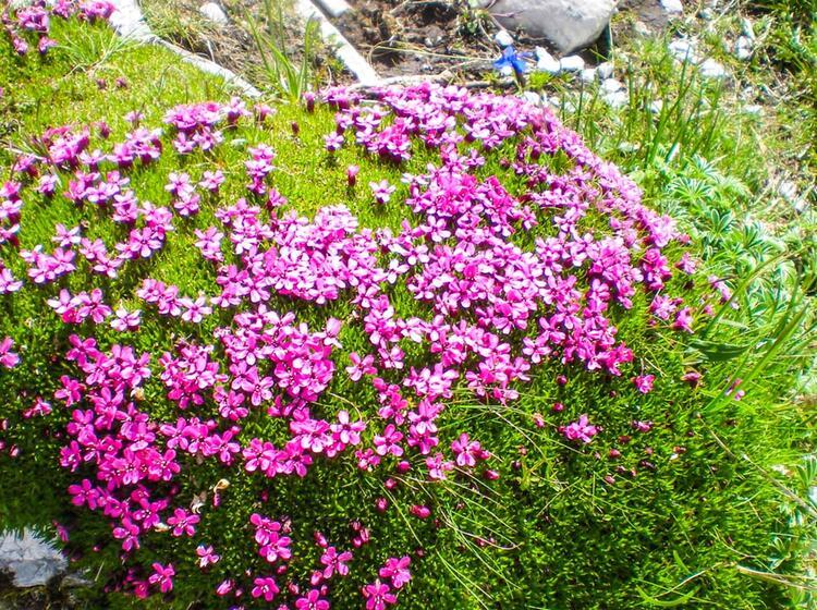 Blumen Am Gimpel Beim Wandern Im Allgaeu