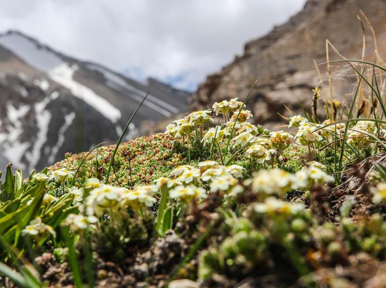 Blumenwelt Beim Wandern In Kirgistan