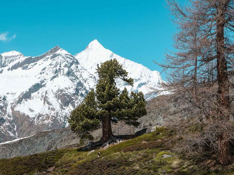 Das Weisshorn Im Hintergrund Auf Der Skitour Zermatt