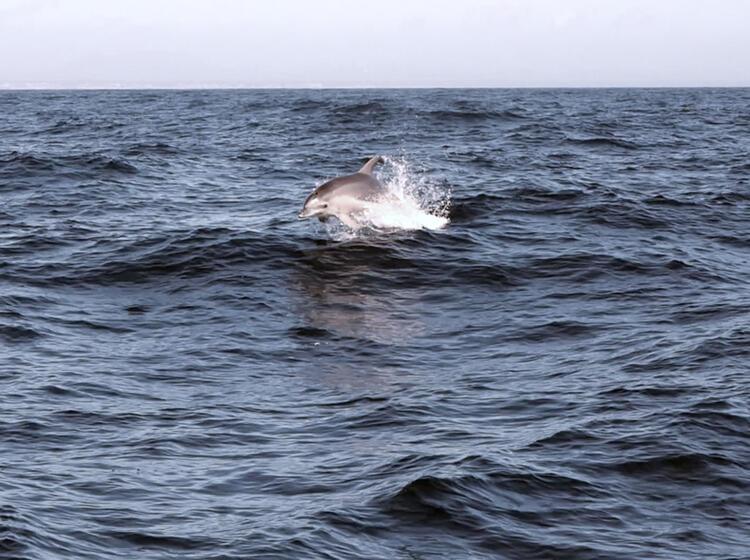 Delphine Begleiten Uns Beim Klettern Auf Sardinien