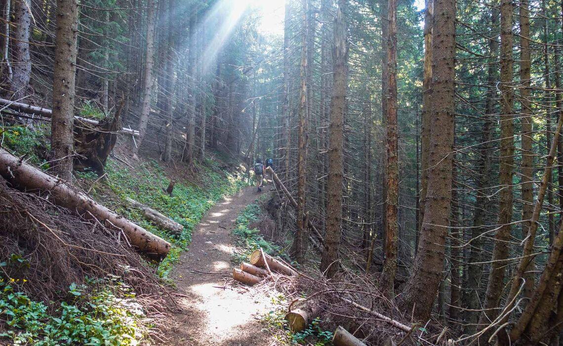 Der Aufstieg Auf Den Feistritzsattel