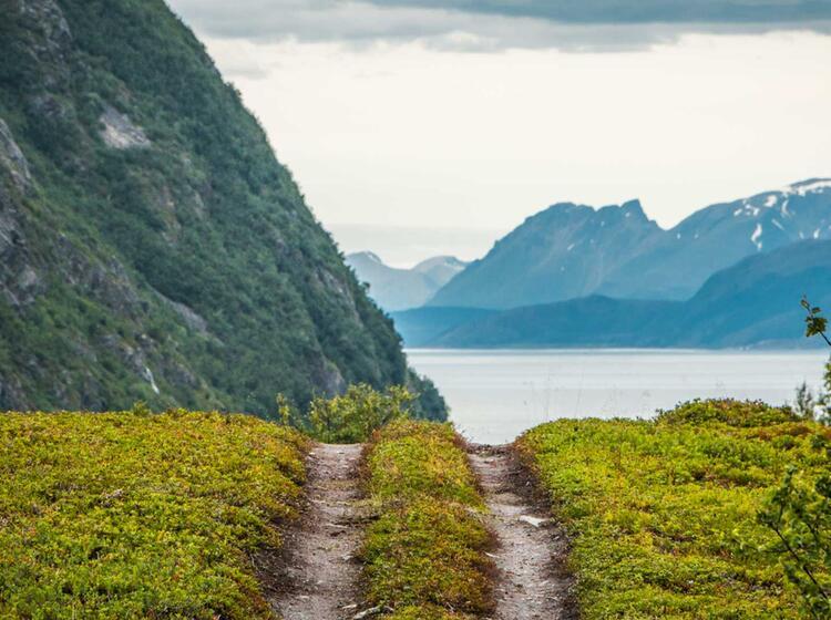 Der Lyngenfjord Im Sommer Bei Lyngseidet