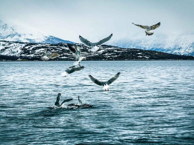 Fischen Auf Der Skitourenreise