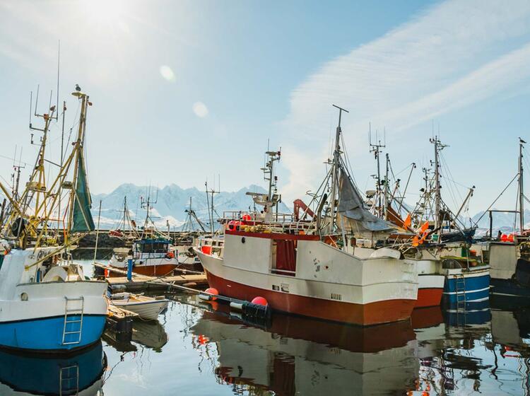 Fischerboote In Lyngen