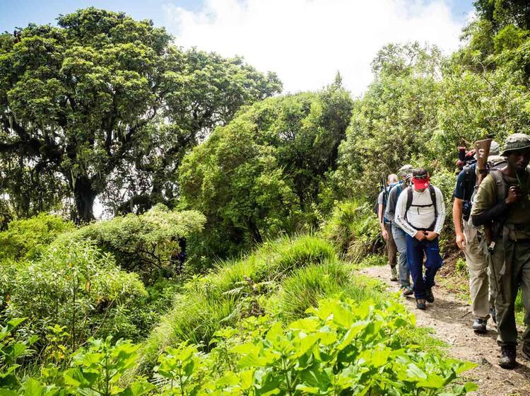 Gefuehrt Auf Den Kilimandscharo