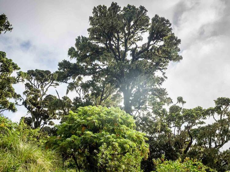Gefuehrte Fernreise Zum Kilimandjaro