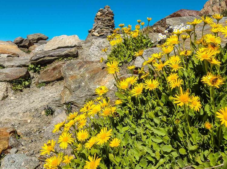 Gefuherte Wanderung Tour Du Mont Blanc