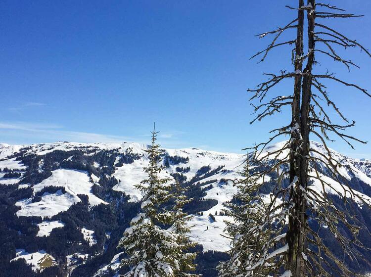 Genuss Skitouren In Den Kitzbuehler Alpen Mit Bergfuehrer