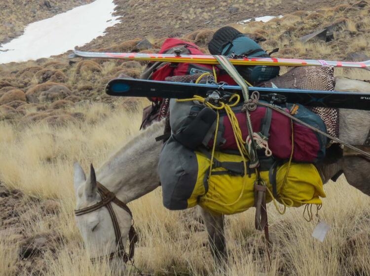 Gepa Cktransport Mit Tragtier Auf Der Skitourenreise