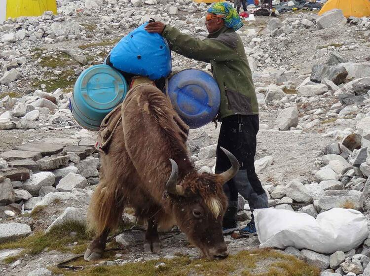 Gepaecktransport Am Cho Oyu