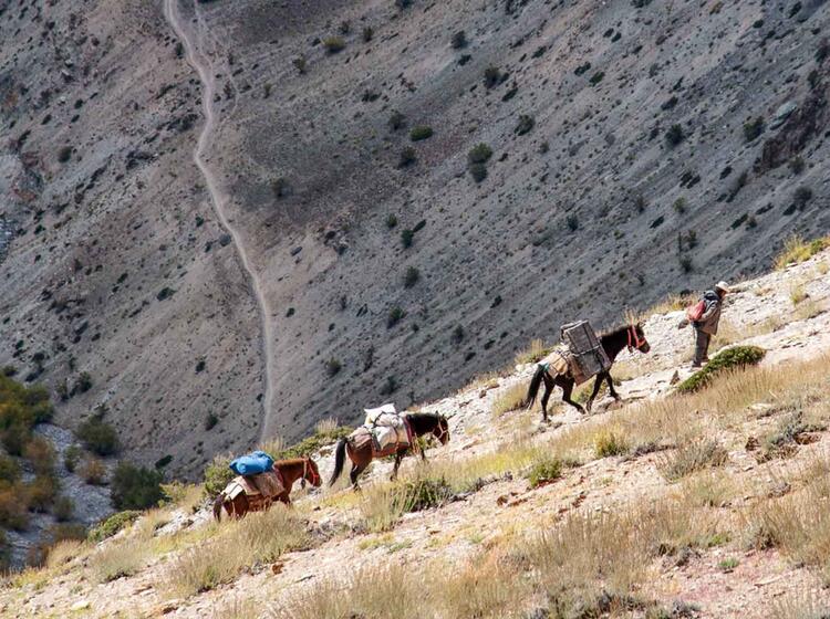 Gepaecktransport Mit Pferden Auf Der Trekkingreise Ladakh