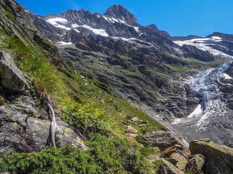 Gletscher Trekking Zum Grimselpass