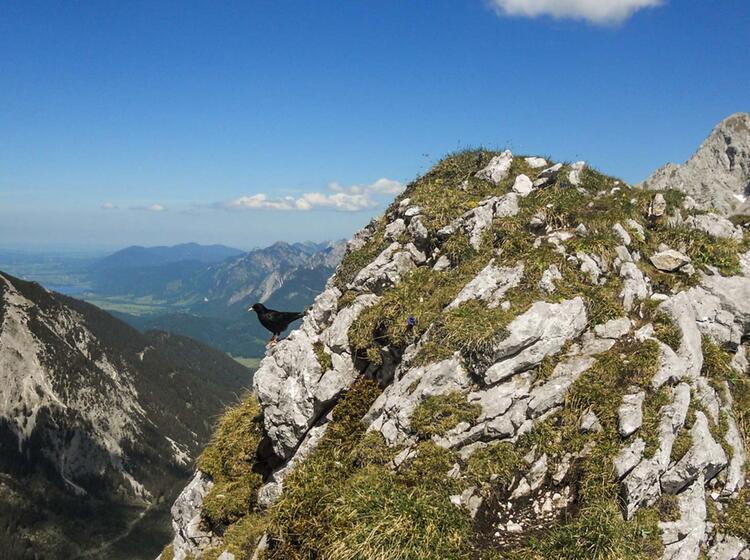 Grosse Schlicke Im Tannheimer Tal Bei Der Allgaeu Wanderung