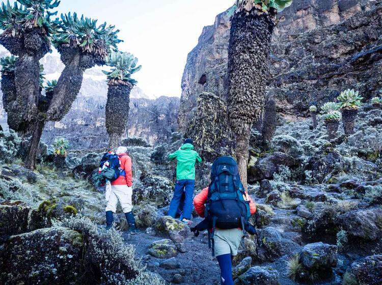 Kilimandscharo Besteigung 432