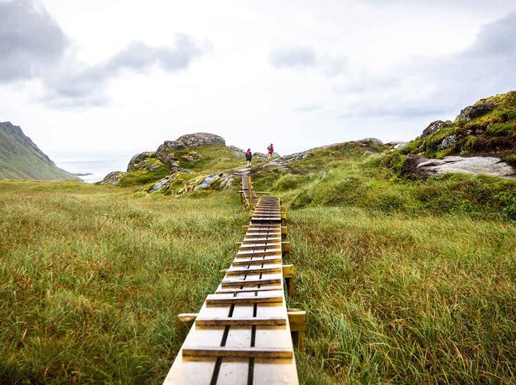 Moorpfad Auf Den Lofoten