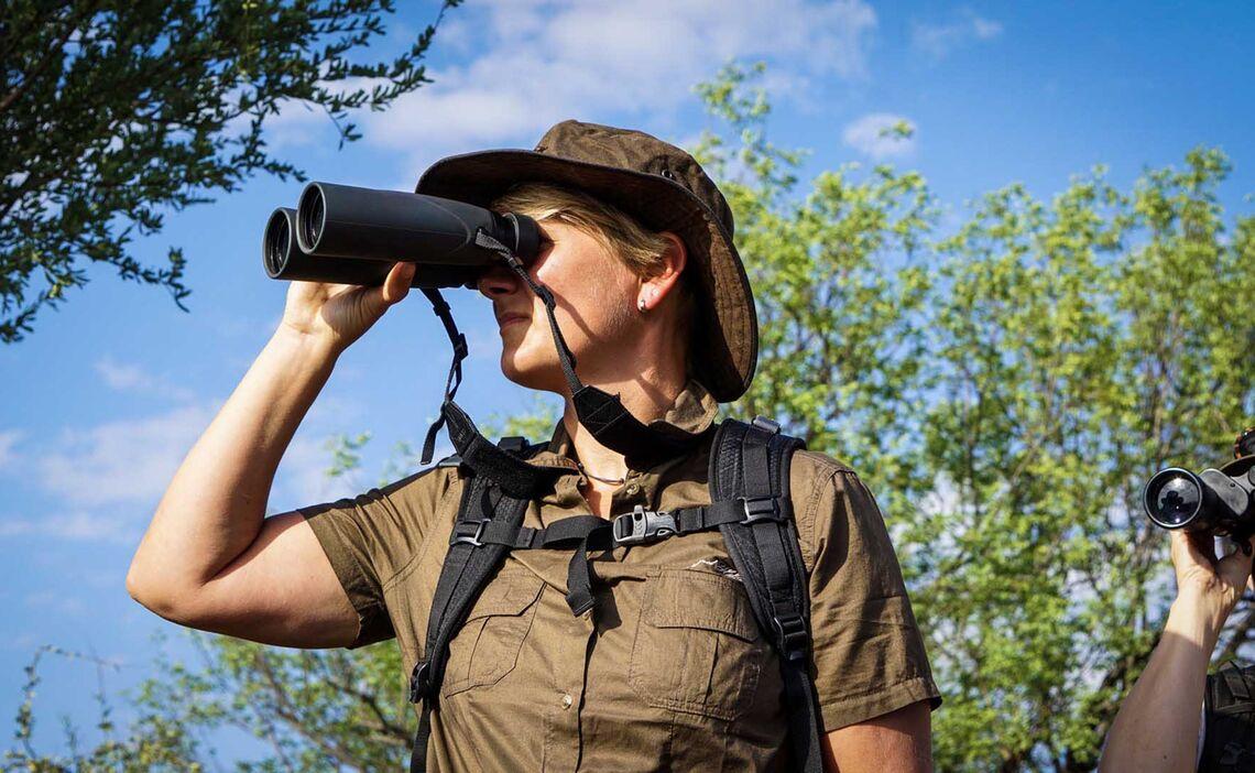 Pafuri Wildbeobachtung