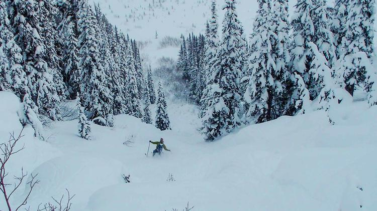 Powder In Den Rocky Mountains
