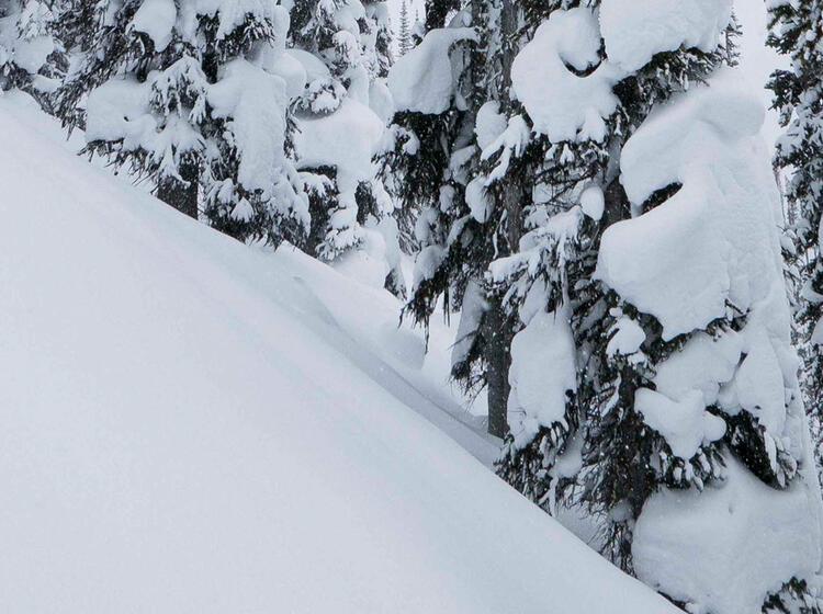 Powder Skitouren In Kanada