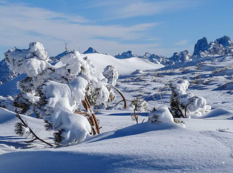 Schneeschuh Wandern Mit Bergfu Hrer