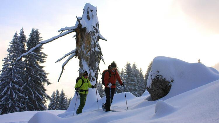Schneeschuhwandern Am Spitzingsee
