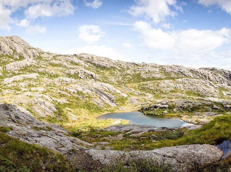 Seen Ud Wiesen Auf Den Lofoten