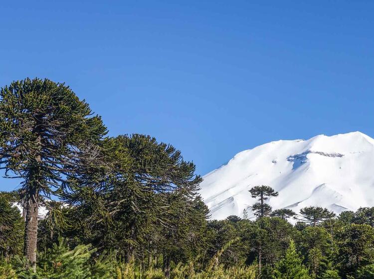 Skitouren Reise Chile Mit Bergfuehrer