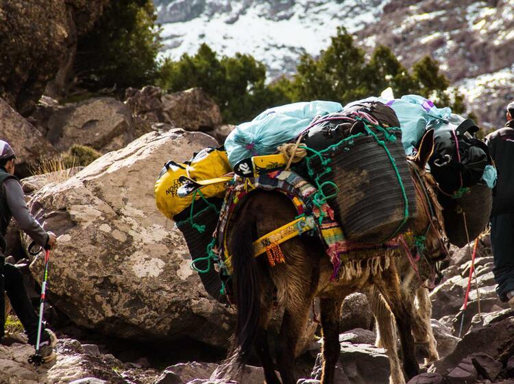 Skitransport Mit Muli Auf Der Skitourenreise Nach Marokko Toubkal Gebirge Mit Bergfuehrer