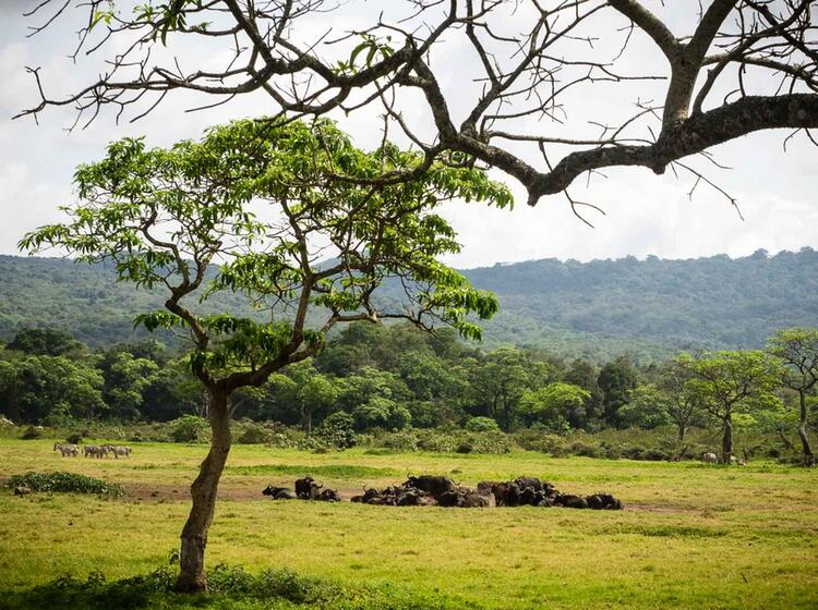 Trekking Und Wildnis Am Kilimandscharo Ueber Die Machame Route