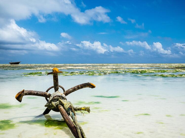 Trekkingreise Kilimandjaro Und Zanzibar