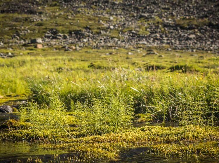 Unberuehrte Natur In Nordnorwegen
