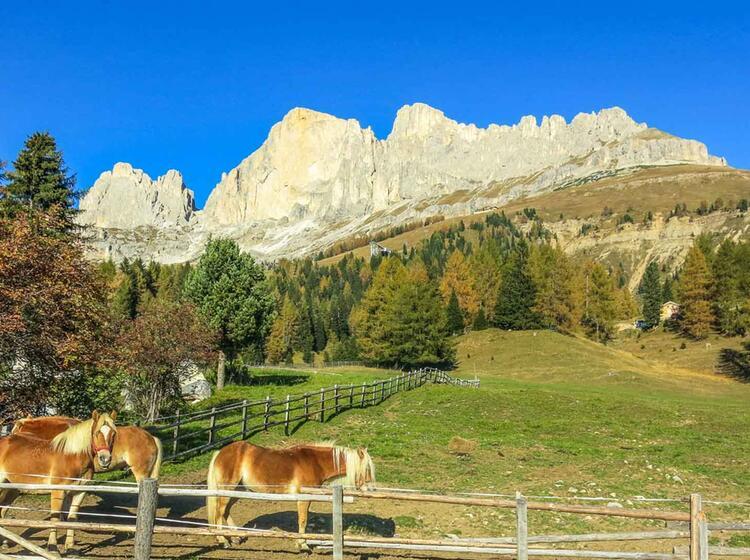 Wandern Im Rosengarten In Den Dolomiten