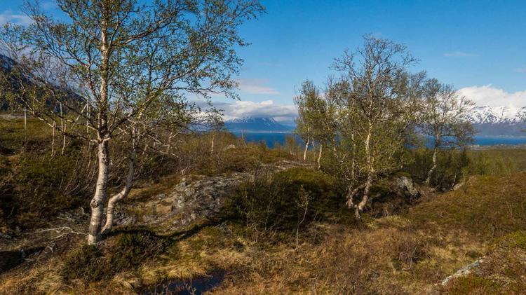 Wandern Rund Um Den Lyngen Fjord