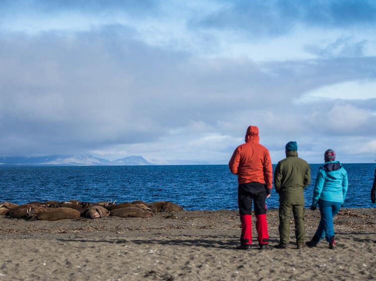 Wandern Und Natur Beobachten Auf Spitzbergen