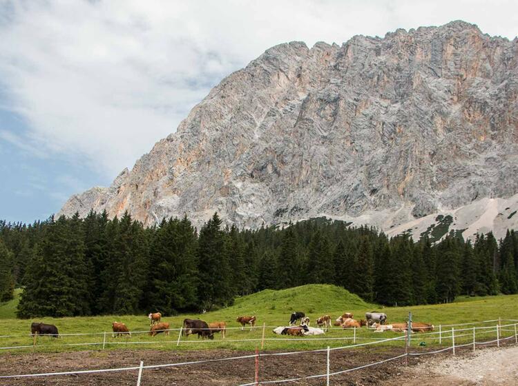 Wandern Von Ehrwald Zum Schachen Schloss Und Weiter Nach Garmisch