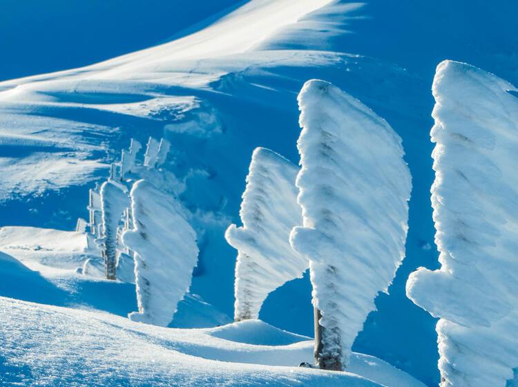 Winterwandern Mit Bergfu Hrer In Garmisch