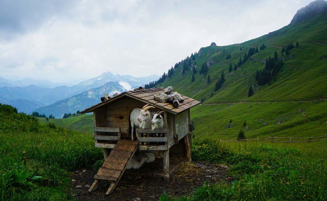 Ziegenstall Auf Der Huettenwanderung Fuer Einsteiger